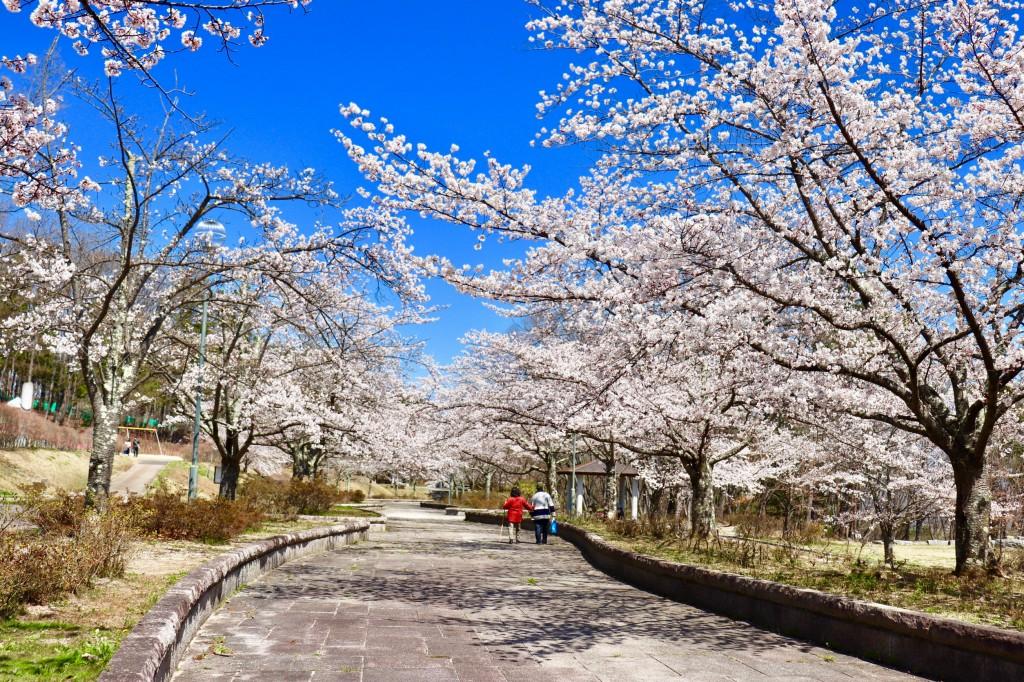 信夫山公園
